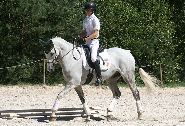600 sammicklem dressage